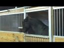 Для этой лошади, в конюшне не существует засовов. самое умное животное.