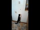 Мой кот жирдяй))