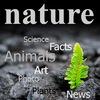 Nature|Природа