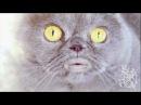 Поющий кот Сальвадор - 3 часть / Salvador singing cat - part 3