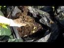 Компост В МЕШКАХ и новый способ БОРЬБЫ с сорняками Compost in plastic bags