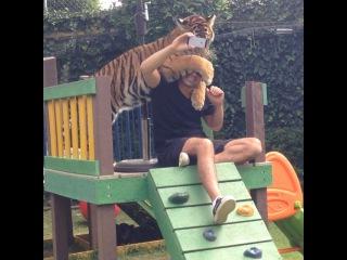 Black Jaguar-White Tiger on Instagram: �Super old video of Tierra... Video viej