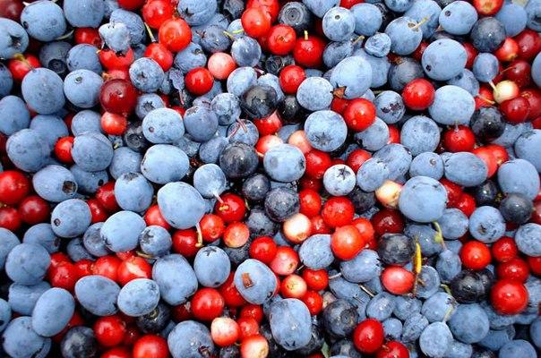 Фрукты и ягоды в Абхазии - время их созревания по месяцам