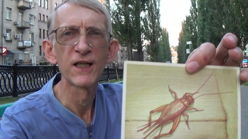 Кушай Кузнечиков и Бери Сталинград Entomologist in Ukraine 2015
