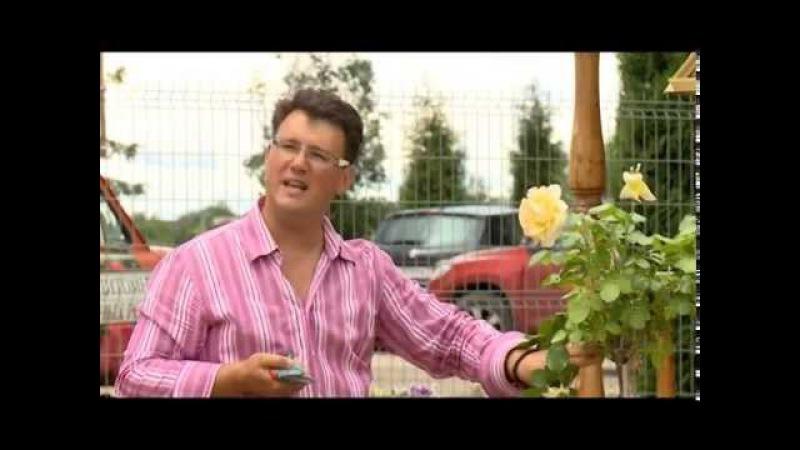 Штамбовые розы Розовое настроение Выпуск 3