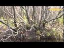 Охота на бобра в Квебеке Искусство охоты