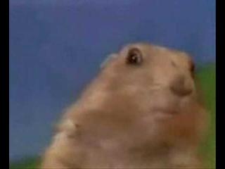 Dramatic Hamster