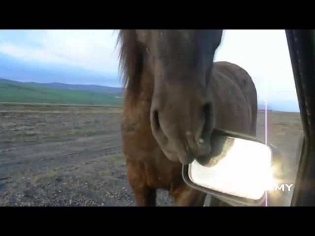 Курва - Конь ест зеркало....