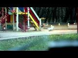 Skype – Детектив по поиску животных 2:00