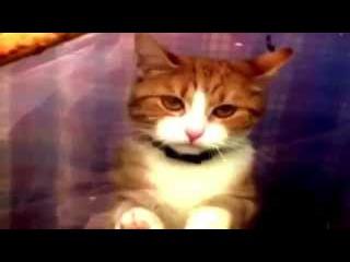 Эти забавные кошки юмор, приколы, смешно часть 1
