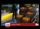 У Росії тракторними гусеницями розчавили понад двісті кілограмів турецьких мандаринів