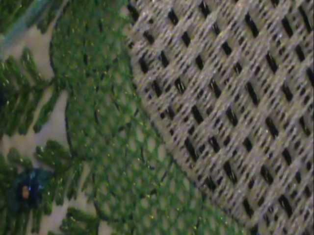 Aprende plumaje bonbachito pavorreal con marimur 4 (2) corregido