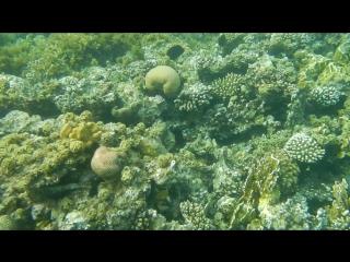 Подводный мир красного моря (съёмка с фотика)!
