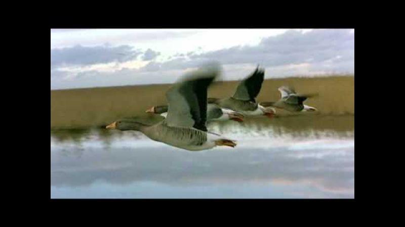 Перелетные птицы.Рома Жуков.