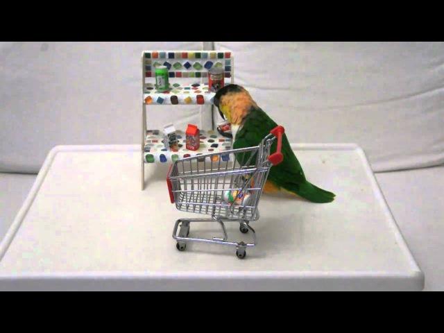 Caique - Shopping at super market