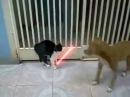 Бешеный кот рубит