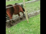 """email: equusfails@gmail.com on Instagram: """"OMG LOL TAG UR FRIENDS!? Credit: kleine.farm. ? ??????????? Follow my chica @devyn.looney maybe get a sh"""