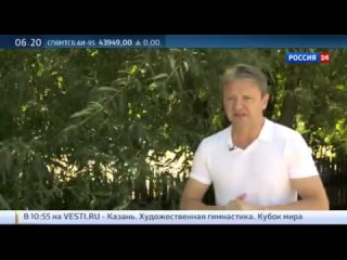 Александр Ткачев Россия получит урожай в сто миллионов тонн зерна