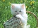 День Кошек. Пушистое счастье. Всемирный день кошек - 1 марта 2013