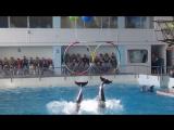 Выступление дельфинов 26.09.2015 г.