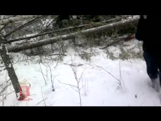 Лесорубы снимали на видео жестокое убийство спящего медведя