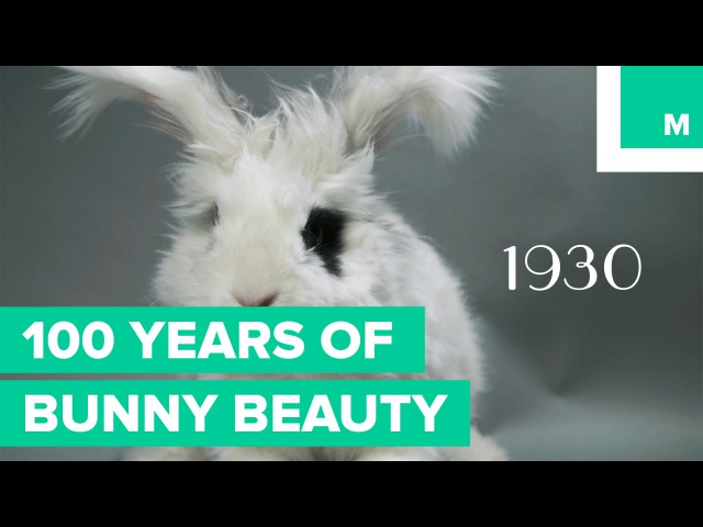 100 Years of Bunny Beauty Playboy's Got Nothing on These Heart Thumps Fuzzy Friday