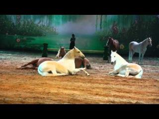 Apassionata 2011*-wien - Sylvie Willms und ihre Araber - im licht der sterne
