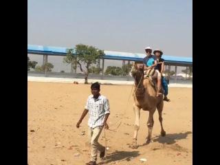 Чтобы не потерять баланс и не свалиться, когда вы спускаетесь с верблюда очень важно наклониться назад🐪