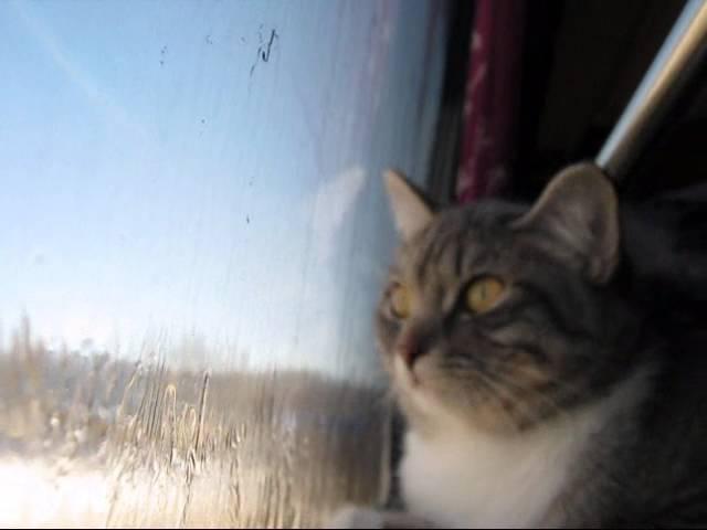Отдых на Алтае зимой. Кошка Нора возвращается домой