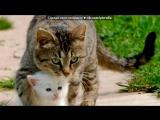 «добавляйте ваши меммы про животных!» под музыку Песня из мультика Иван Царевич и серый волк 2 - Василисы-красками разными. Picr