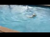 Переехали в новый дом и собака увидела басейн