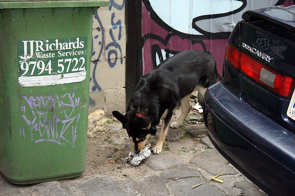 Почему собаки делают это 0tFlDxW-axE