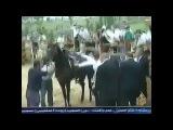Эрдогану на яйца  наступил арабский скакун!))