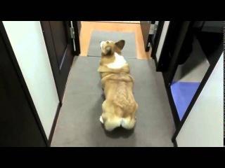 Собачий тверк и другие приколы с животными :)