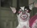 Satan Dog
