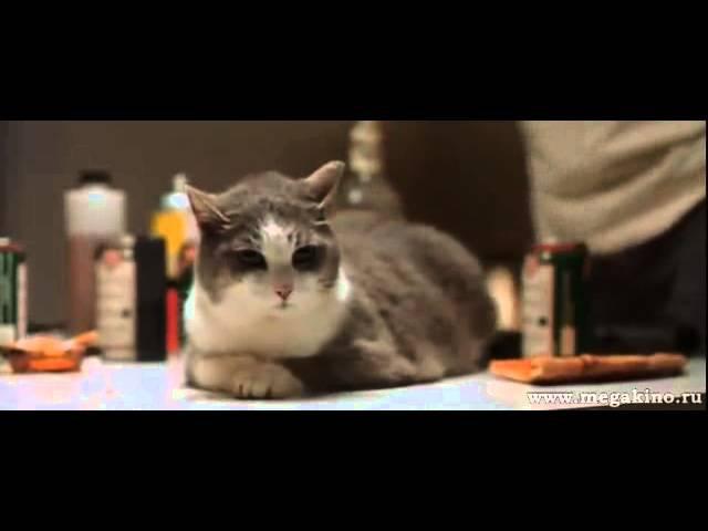 Святые из трущоб (эпизод с котом)