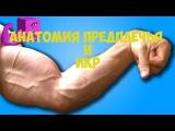 Анатомия Икр и Предплечья - ТОП 5 упражнений на икры и предплечья