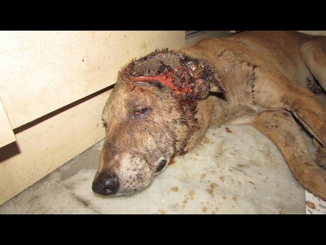 Невероятное спасение смертельно больной собаки