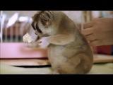 Всем хорошего дня! -) Лори - самое милое животное в мире) лемур, лори, смешные животные, милое видео