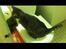 Как приучить кота к унитазу Шаг