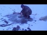 Специалист- браконьер споймал огромного толстолоба на сеть зимой. poacher catches networks