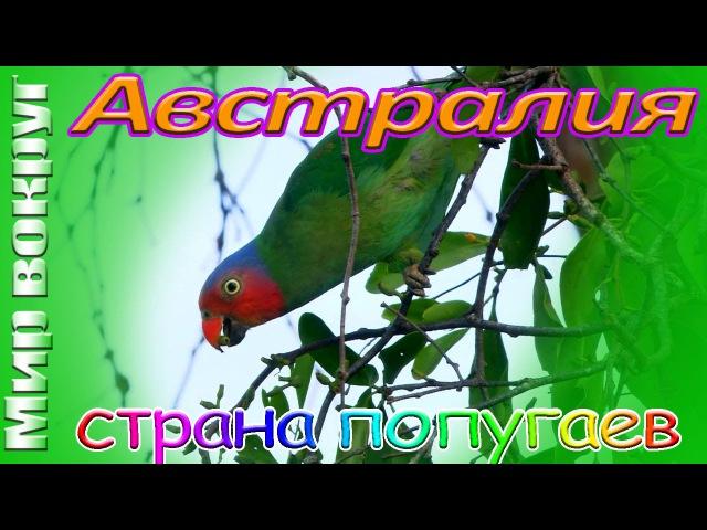 Австралия Страна Попугаев. Царство Австралийских Попугаев.