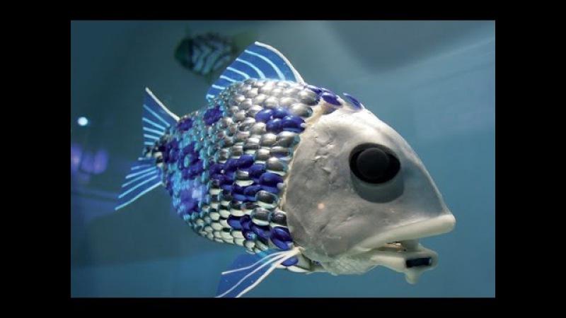 Рыба - робот и гормон доверия. Веселая наука.серия 10 (Документальные фильмы National Geographic)