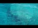 Красное море_2014