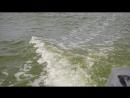2014 год. август. остров птиций - узкая полоска острова Ейская Коса. краснодарский край, г. Ейск. азовское море