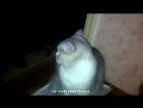 (В конце призы) ЛУЧШИЕ ПРИКОЛЫ SAMYY KLASS (ВЫПУСК 199) (online-video-cutter.com) (1)
