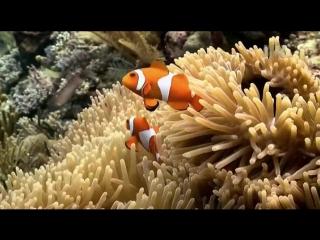 Animal planet. Дикие животные. Красивейшие