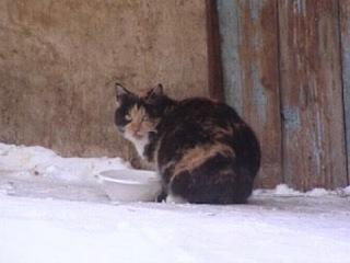 Сердобольные омичи начали операцию по спасению замерзающих на улице кошек
