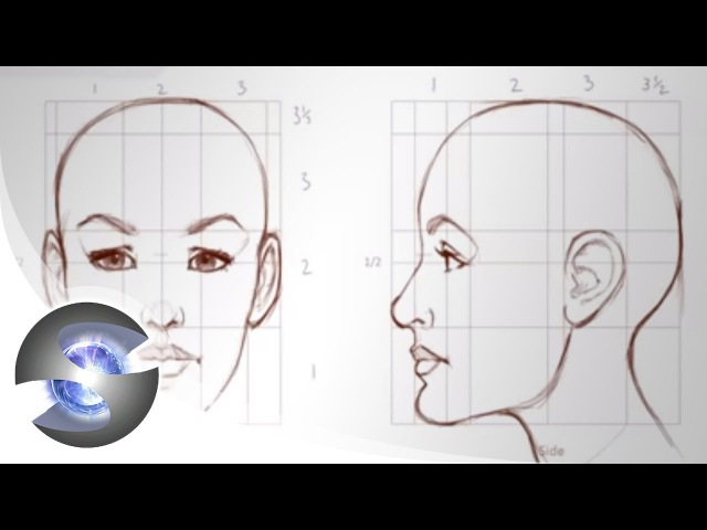 How to Draw - Proportions of the Adult Female Head