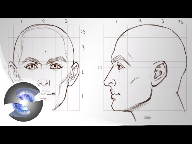 How to Draw - Proportions of the Adult Male Head